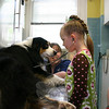 Aleia Bischof listens intently to hear the heartbeat of Travis, an Australian sheep dog, while visiting Mt Pleasant Hospital for Animals with her preschool class on May 14.  (Hicks photo)