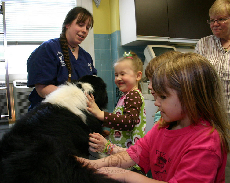 Many of the students from Newtown Congregational Cooperative Nursery School took Mary Simpon up on her invitation to pet Travis, an Australian sheep dog, during their visit to Mt Pleasant Hospital for Animals last week. Travis had no problem with the extra attention.  (Hicks photo)