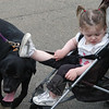 Haley, a black Lab, passes under the leg of pal and two-month old Gabrielle Ansman during Strut Your Mutt last weekend.  (Hutchison photo)