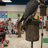Birds in Jonathan Wood's Raptor Project presentation at Head O' Meadow sat on perches while Mr Wood shared information about birds of prey with students.  (Hallabeck photo)