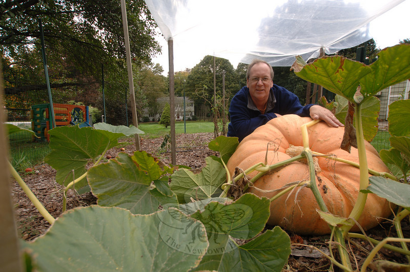 September 29, 2009: James Ryan used 40 pounds of manure, 40 pounds of compost, fertilizers, antifungal treatments, and a huge amount of his own TLC to nurture the 300-pound Atlantic Giant pumpkin he is still raising in his back yard. Kendra Bobowick met Mr Ryan, and his pumpkin, this week. (Bee Photo, Bobowick)