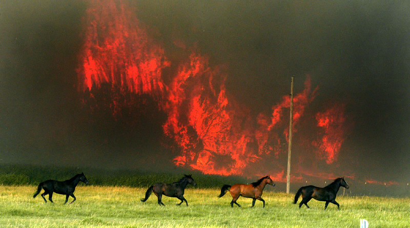Journal photo by Bill Schaefer<br /> Horses seek safety from the Harkness Canyon fire coming down a hill outside of McCammon. The horses were later moved to a safer location.