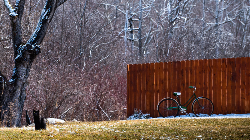 A cat sits in the front lawn of a house on North Auburn Road in Auburn, Maine Tuesday morning, March 31, 2020.