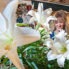 Jaynne Beaule-Hinkley removes pollen from Easter Lilies being prepared to be picked up or delivered at Blais Flower Shop in Lewiston Friday afternoon.  (Russ Dillingham/Sun Journal)
