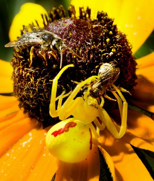 Bee careful