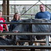 Twin Brook Farm owner Adam Trundy right, and farmhand Jonathan Stevens, left,  watch Zack Crosby block the exit for a cow refusing to be corralled into a trailer to be hauled off by a broker Monday afternoon, May 4, 2020 in Minot, Maine.  Normally the Telstar High School student would be in school but helps out at the farm where his mother works.  Angie Smith, back middle, watches her son learn about hard work and gain valuable life lessons that can not be learned at school.