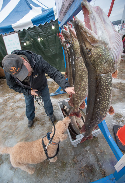 Kevin Pendexter, of Lewiston lets his dog Mookie sniff one of the lunkers in contention for the top prize during Saturday's 4th Annual Oak Hill Boosters Pike Fishing Derby on Sabattus Pond in Wales.  The 19 pound pike, right, was the leader when the photo was taken in the morning.