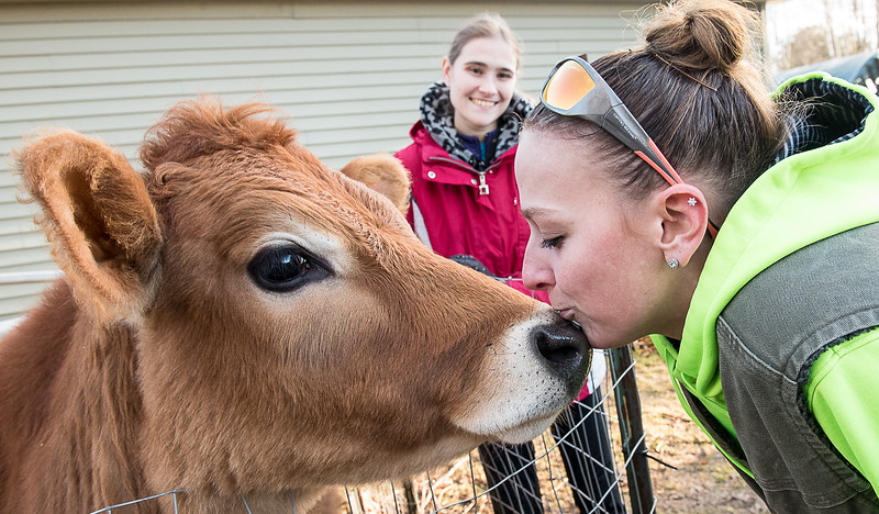 Rising Stars Therapeutic Farm volunteer Carline Kelley reacts as staff member Jenna Presby gives the farm's cow, Brady, a kiss after they completed their chores on the Turner farm last week.  (Russ Dillingham/Sun Journal)