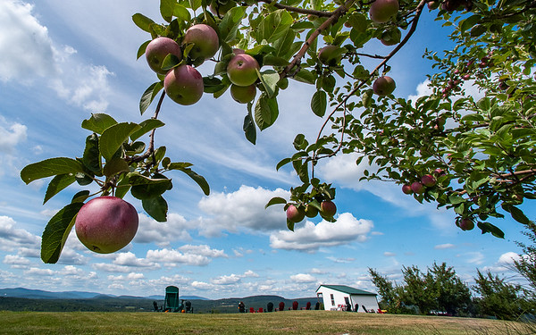 A slow start and warm weather late in the season means apples are a little behind this year but ready to be picked and many orchards, like Ricker Hill Orchards, have opened to for the public to come pick their own.