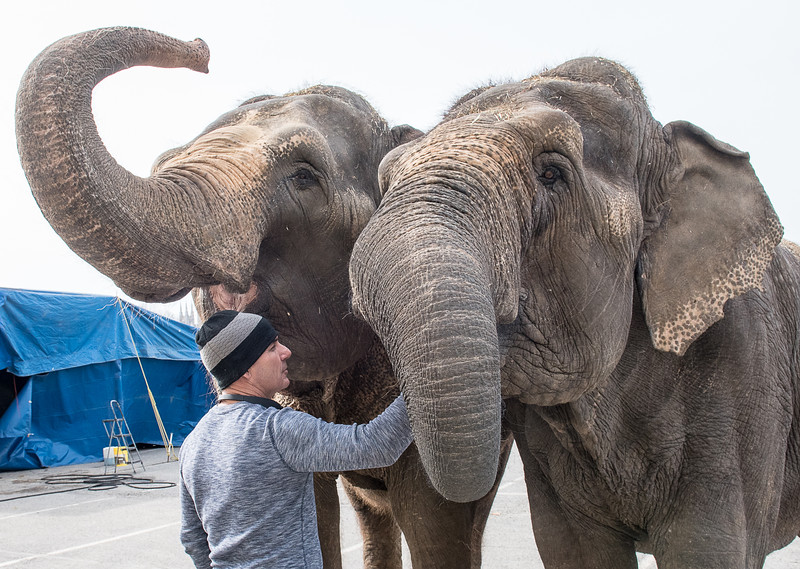 Kora Shrine Circus elephant trainer Terry Frisco gives some love to Isla, left and Kelly, a pair of Asian elephants in the parking lot of the Colisee in Lewiston Friday afternoon where they will be performing throughout the weekend and a special morning show on Monday.  For more information visit korashriners.org/circus.  (Russ Dillingham/Sun Journal)