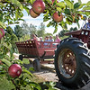 Arthur Hayford drives a wagon through Boothby Orchard and Farm in Livermore during Maine Apple Sunday. (Russ Dillingham/Sun Journal)