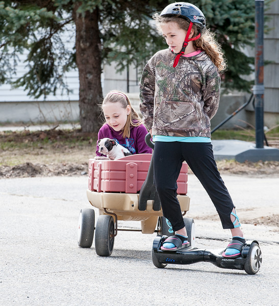 Lexus Keene, 10 pulls her friend, Brianna Pelletier, 10, up and down First Street in front of her house in Lewiston Friday  afternoon with her 7 week old Boston Terrier Bosco as the skies finally clear on the last day of their school vacation.  (Russ Dillingjham/Sun Journal