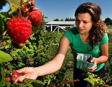 Community Raspberries