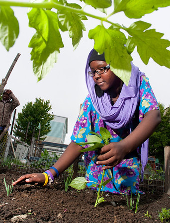 Planting at the Knox Street Community Garden