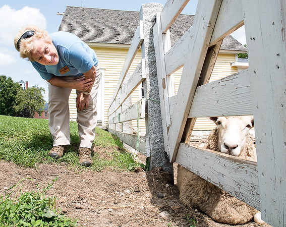 Paula Gauthier, a tour guide at Shaker Village in New Gloucsester, talks to one of the sheep at the farm while on a break Tuesday afternoon at the iconic homestead. (Russ Dillingham/Sun Journal)