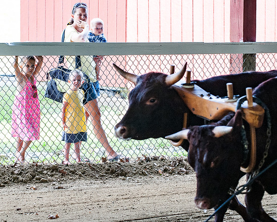 Stephanie Wright holds her 8 month old son Cameron as daughters Kendal, 6, left and Kerigan, 3, watch the Farmers' Pull at the Monmouth Fair Thursday morning.  To watch a video from the morning's activities, visit sunjournal.com(Russ Dillingham/Sun Journal)