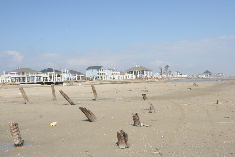 Here they are in the foreground with sandpiper in the background.