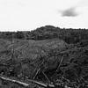 Es evidente el impacto sobre el medio ambiente por la tala de árboles.