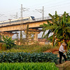 The Guangshen Railway slicing through the farm plots.