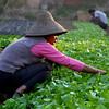 Local Shilong Farmers