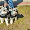 Stewbilee Festival in Brunswick, Georgia at Mary Ross Waterfront Park - Dog Run 10-26-13