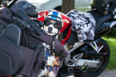 The Dogs Trust Margam Park June 2014