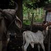 Zona de Reserva Campesina: una propuesta de paz