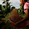 Zonas Humanitarias y de Biodiversidad