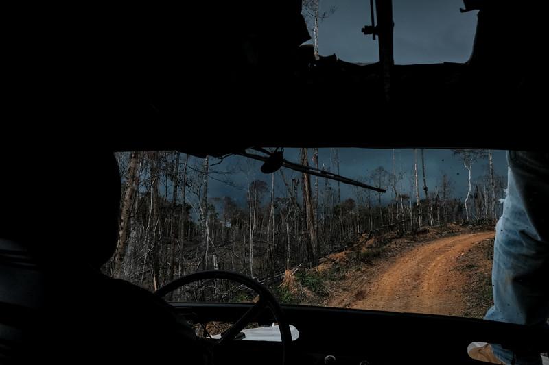Cada vez más Deforestación