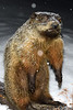 20150201_Groundhog_003_out