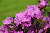 20140503_Spring_Flowers_003_out