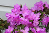 20140503_Spring_Flowers_001_out