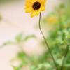 SXM Flower