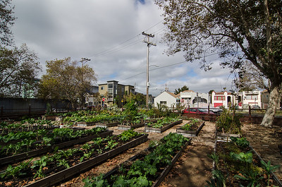 The City Slicker Farms garden at Union Plaza Park in Oakland.