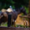 Los campesinos nos muestran algunas balas que encontraron incrustadas en los árboles y en el suelo muy cerca de sus casas.
