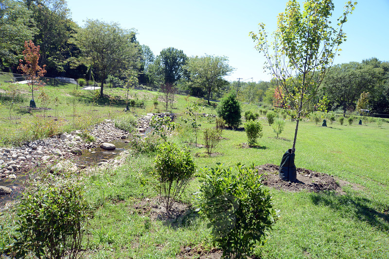Native trees and shrubs are now in place and will eventually cast shade on the Deep Brook tributary at Dickinson Park. The recent planting is now an environmentally sensitive area that will need time to mature. (Bobowck photo)