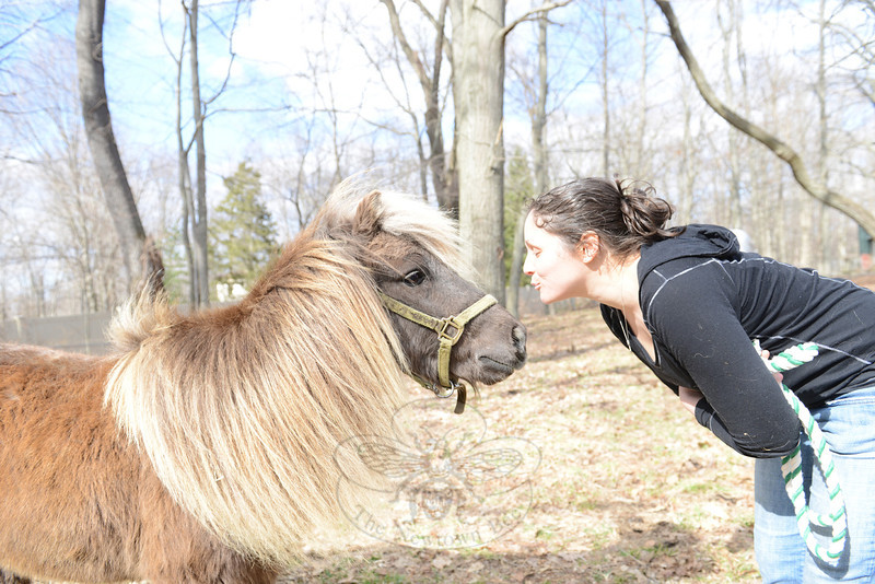 "Sarah Rosado decided to fundraise and rescue Horatio the pony recently when she noted that he was ""skinny,"" but also a ""good boy."" Horatio will be ready for adoption by the end of June, which is also when Ms Rosado plans to relocate him from her Bethel location to property in Newtown.  (Bobowick photo)"