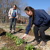 Volunteer Patricia Sabato looks at fresh greens growing in the Victory Garden Monday. In the background and also volunteering her time is resident Allison Payne. (Bobowick photo)