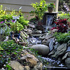 Water cascades from the waterfall built by Chris Lincoln, and begins its 30-foot journey downhill. Coleus, hosta, and a variety of other plants add to the natural look of the backyard stream. (Crevier photo)