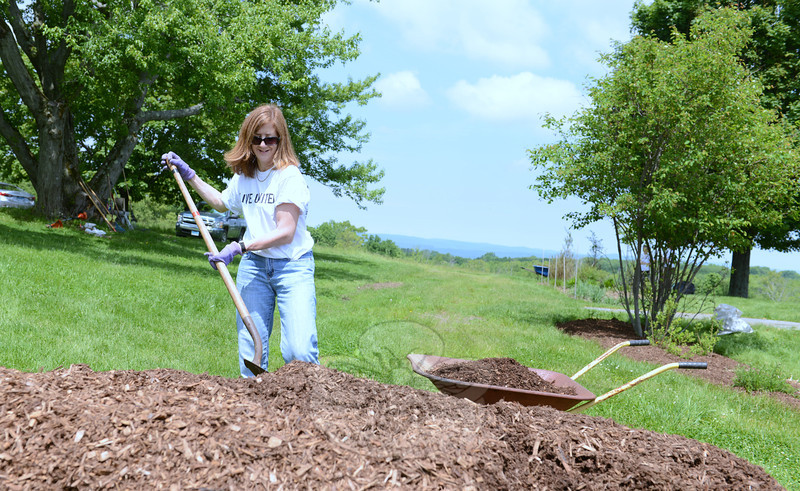 Valerie Droukas volunteered her time Wednesday, June 4, mulching flower beds to help refresh the gardens and grounds at the Holcombe Hill Wildlife Preserve. She and other members from The Taunton Press formed a team that contributed to work at Newtown Forest Association's property. (Bobowick photo)