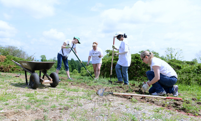 Weeding and clearing rocks from a patch of lawn are, from left, Kate Sheely, Jonel Dushay, Sheha Suryawanshi, and Dawn Ussery. (Bobowick photo)