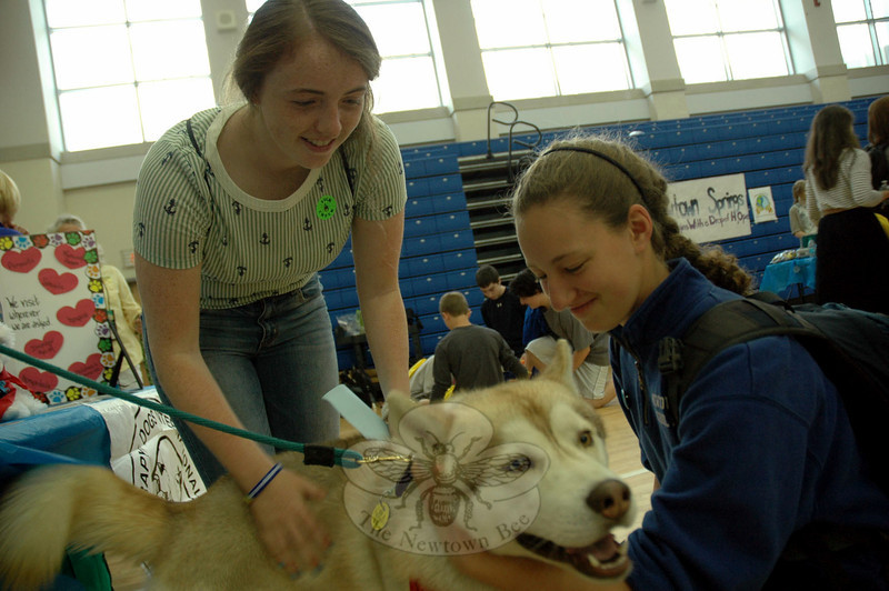 Newtown High School seniors Sarah Lyon, left, and Katie Reilly pet Ringo, with Therapy Dogs International, at a booth during the high school's Annual Health Fair, conducted Wednesday, May 21. (Hallabeck photo)