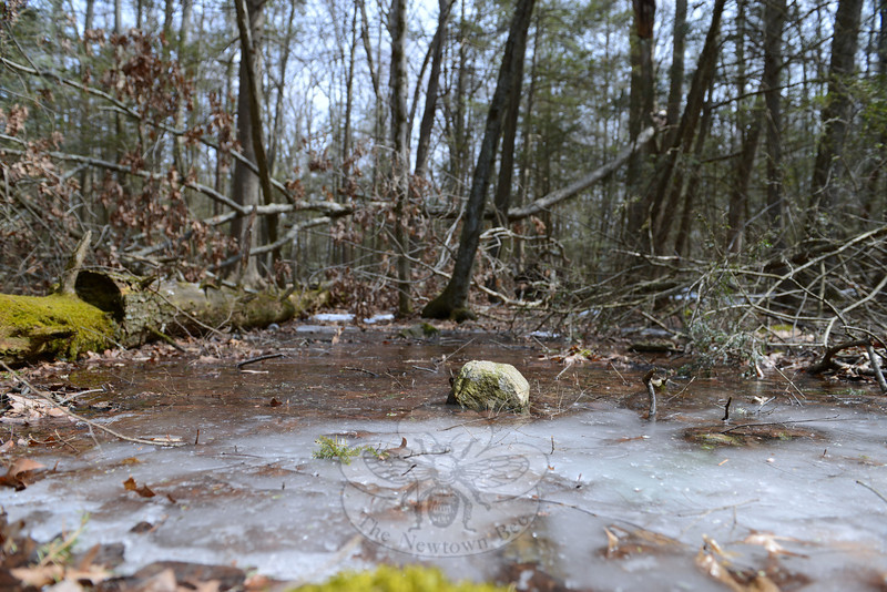 Where the Pole Bridge trail levels out, a shallow vernal pool sits hidden by fallen trees just off the path. Deeper into the woods, the trail crosses stone walls and crests rocky outcroppings before taking hikers through groves of hemlock. (Bobowick photo)