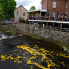 A cheering crowd watched ducks rush toward the Pootatuck and splash into the water at shortly past 2:30 pm Saturday, May 24. The first 20 ducks to cross a finish line established downstream were the race winners. This year's annual duck race included a town festival of vendors, music, family-friendly events, charitable collections, and demonstrations, among other attractions filling Sandy Hook Center Saturday morning and into the afternoon. (Bobowick photo)