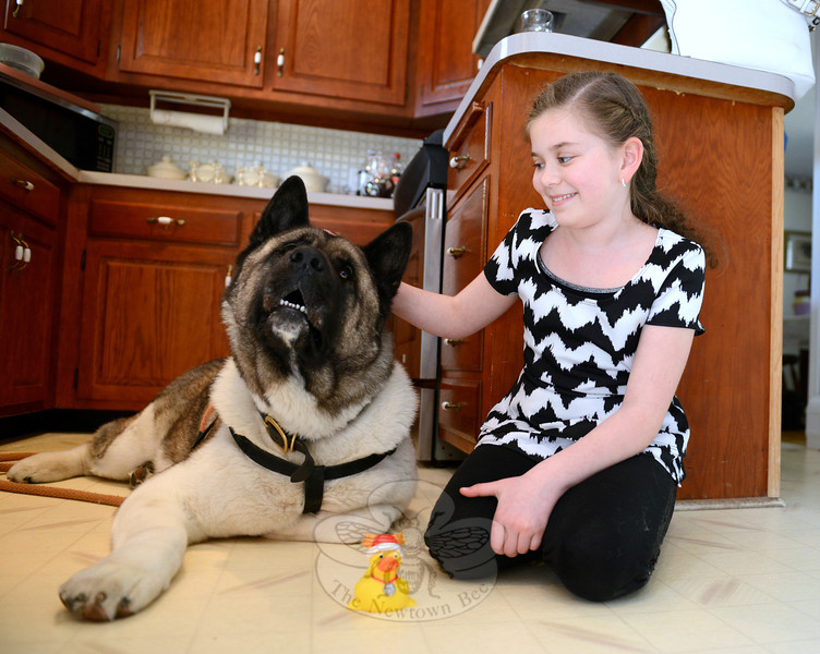 Samantha took out her collection of rubber ducks and chose one to show to Spartacus when the two had a surprise reunion on April 26. Although he sniffed the little toy, Spartacus much preferred Samantha's attention. (Bobowick photo)