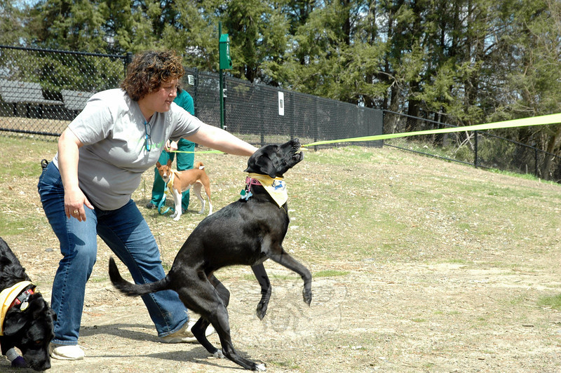 "Rose Ann Reggiano, Parks & Recreation assistant director, showed her dog Cleo where to ""cut"" the ribbon to Park and Bark, the town's new off-leash dog park, during its soft opening on Saturday, May 3. (Hallabeck photo)"