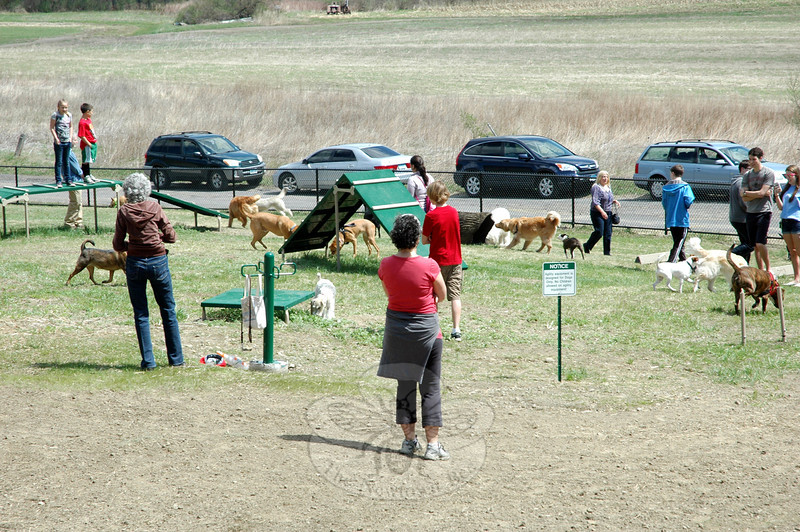 "Dogs quickly investigated all that Park and Bark has to offer after the ribbon was officially ""cut"" for the town's brand-new off-leash dog park on Saturday morning.  (Hallabeck photo)"