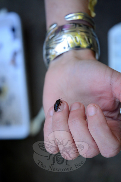A macroinvertebrate crawls across Kit Kechejian's finger after it was pulled from a stream as part of a recent scientific sampling project of aquatic life. (Gorosko photo)