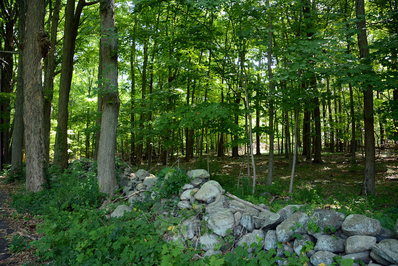 This rustic view, framed by stone walls that formerly delineated farm fields, looks toward undeveloped land alongside Robin Hill Road #2, which is off Rock Ridge Road near the Rock Ridge Country Club in Dodgingtown. Two development firms are proposing that this property, as well as land off Scudder Road, near Ferris Road, be the site of a cluster-style residential subdivision known as The Preserve at Newtown.  (Gorosko photo)