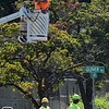 Signal crews responded on Tuesday, August 26, to the busy junction of Main Street, Sugar Street, South Main Street, and Glover Avenue in seeking to resolve a phasing problem with the traffic signals at the busy four-way intersection where two state routes meet. The malfunctioning three-phase signals were displaying very short and very long phases for traffic entering the intersection, resulting in exten-sive traffic backups. Notably, Tuesday was the first day of school of the 2014-15 school year. (Gorosko photo)